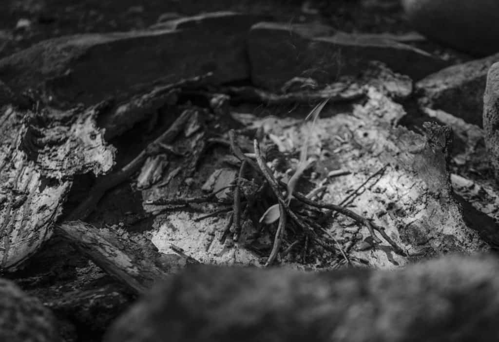 Photo of fire and kindling wood